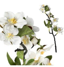 PTMD PTMD Blossom Flower White Mini
