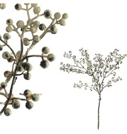 PTMD PTMD Berry Plant Grey
