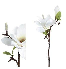 PTMD PTMD Magnolia White