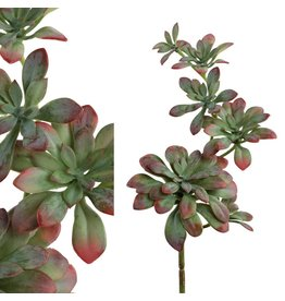 PTMD PTMD Succulent Green/Red Hanging