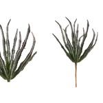 PTMD PTMD Succulent Haworthia 18x11x27cm