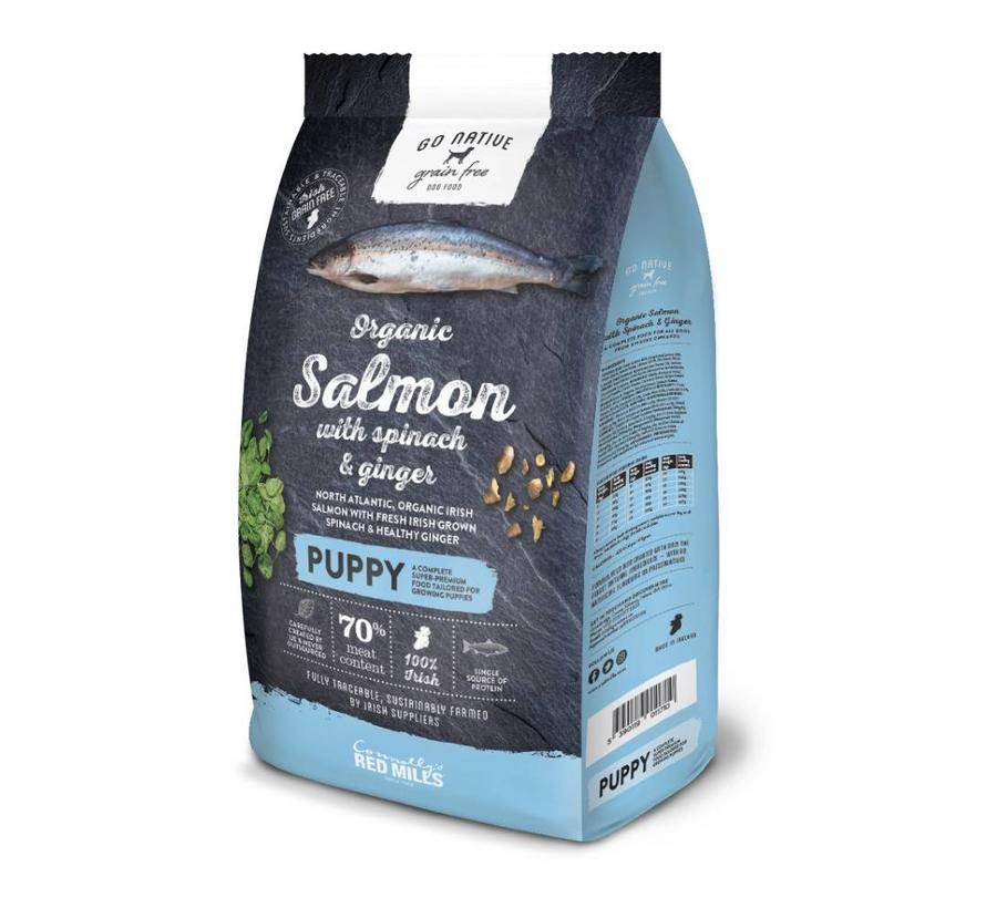 Go Native Puppy Salmon