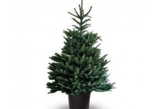 Kerstboom met Kluit