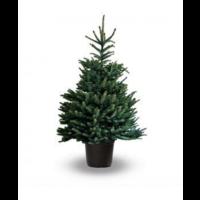 thumb-Kerstboom - Picea Omorika - Met Kluit - 150cm-1