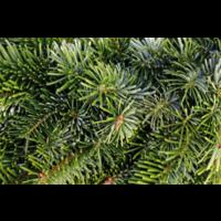 thumb-Kerstboom - Nordmann - 175 cm - Online - Kopen-2