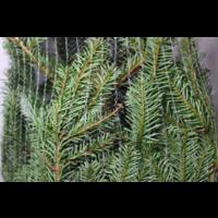 thumb-Kerstboom - Nordmann - 175 cm - Online - Kopen-3