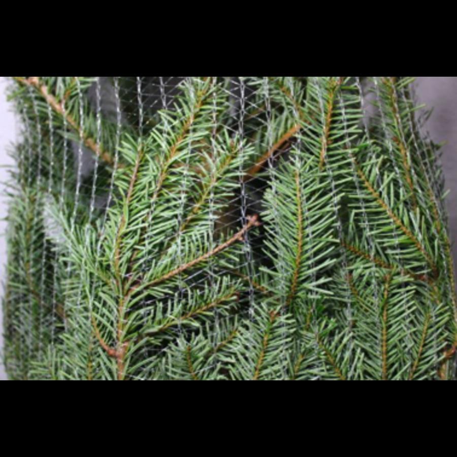 Kerstboom - Nordmann - 175 cm - Online - Kopen-3