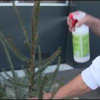 thumb-Kerstboom - Picea Omorika - Met Kluit - 150cm-4