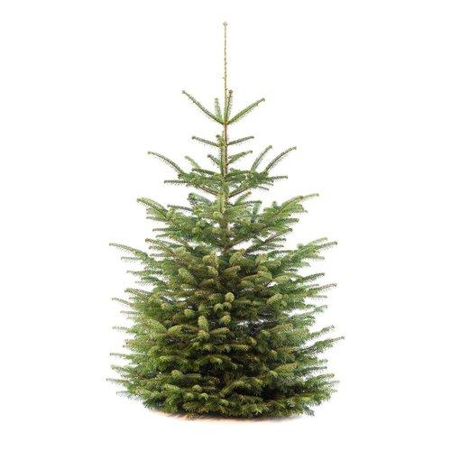 Nordmann Kerstbomen