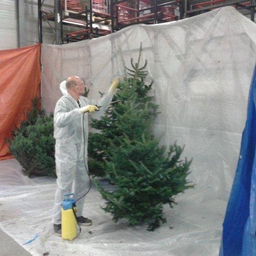 Geïmpregneerde Kerstbomen