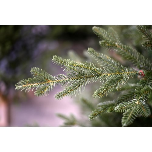 Our Nordic Christmas by Van Der Gucht Kunstkerstboom - Arkansas - 152 cm  - PE/PVC - Houten Voet - Our Nordic  Christmas