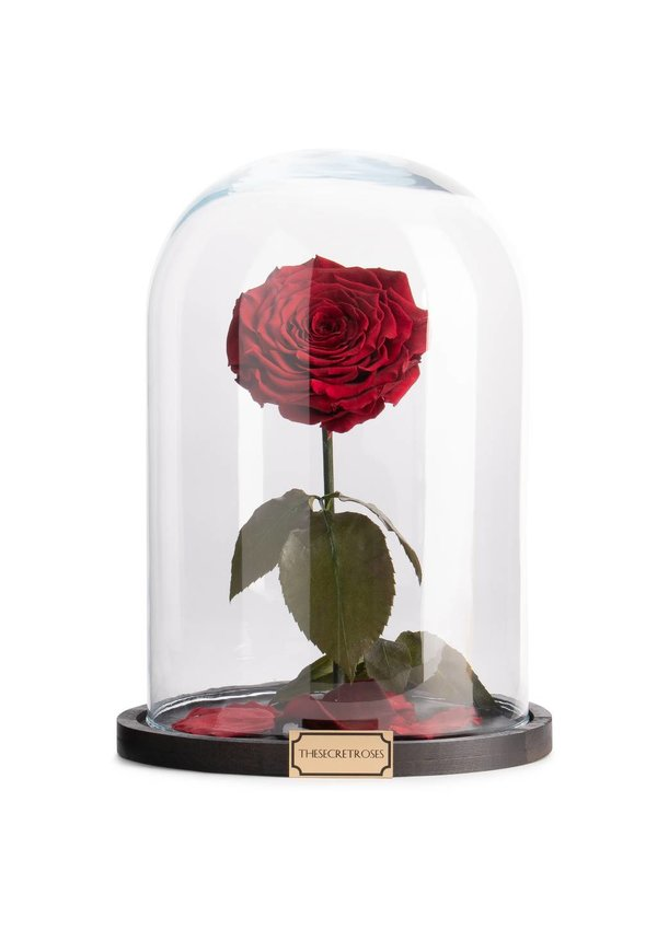 Thesecretroses ROSE IM GLAS rot