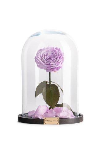 Thesecretroses ROSE IM GLAS lila