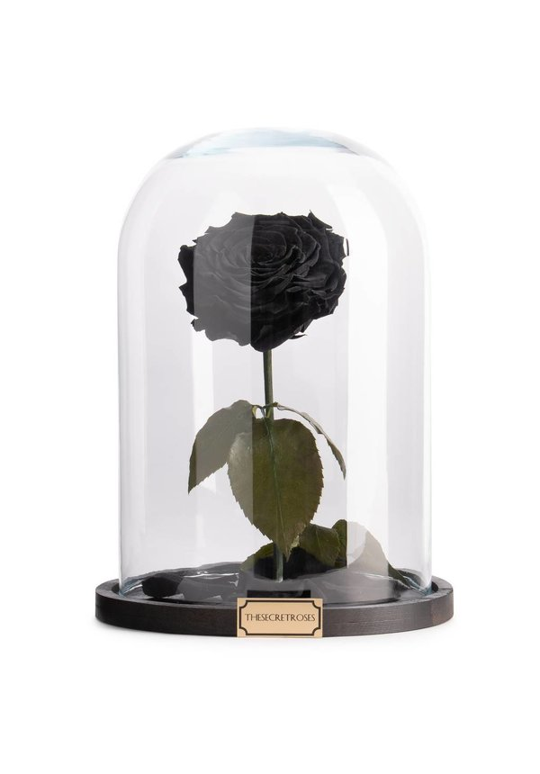 TheSecretRoses Longlife roos in stolp zwart
