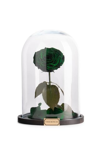 Thesecretroses ROSE IM GLAS dunkelviolett grün