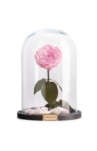 Thesecretroses ROSE IM GLAS turquoise  rose