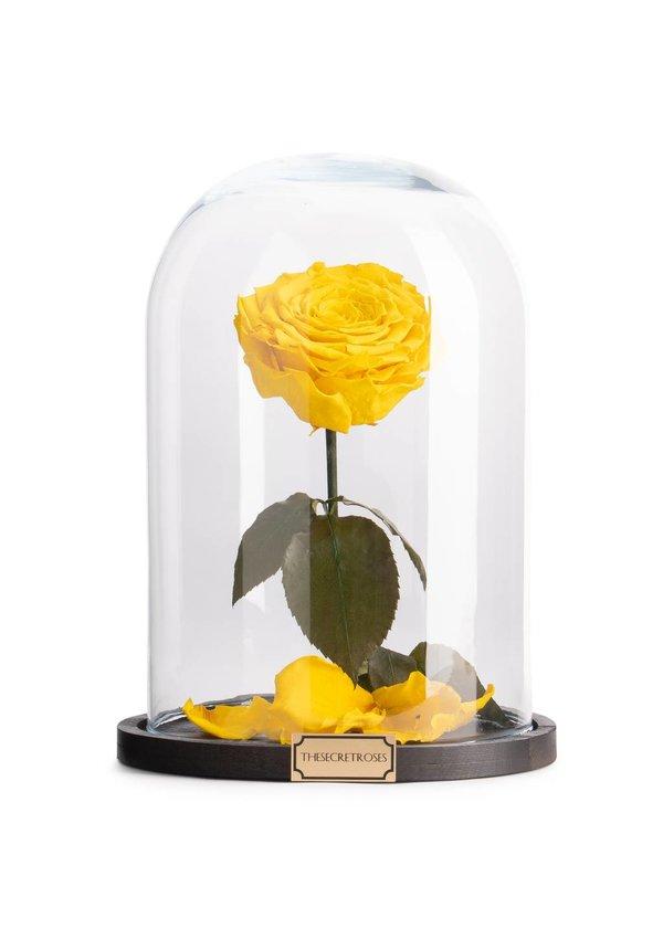 TheSecretRoses Longlife roos in stolp geel
