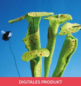 2020 Anleitung: Fleischfressende Pflanze