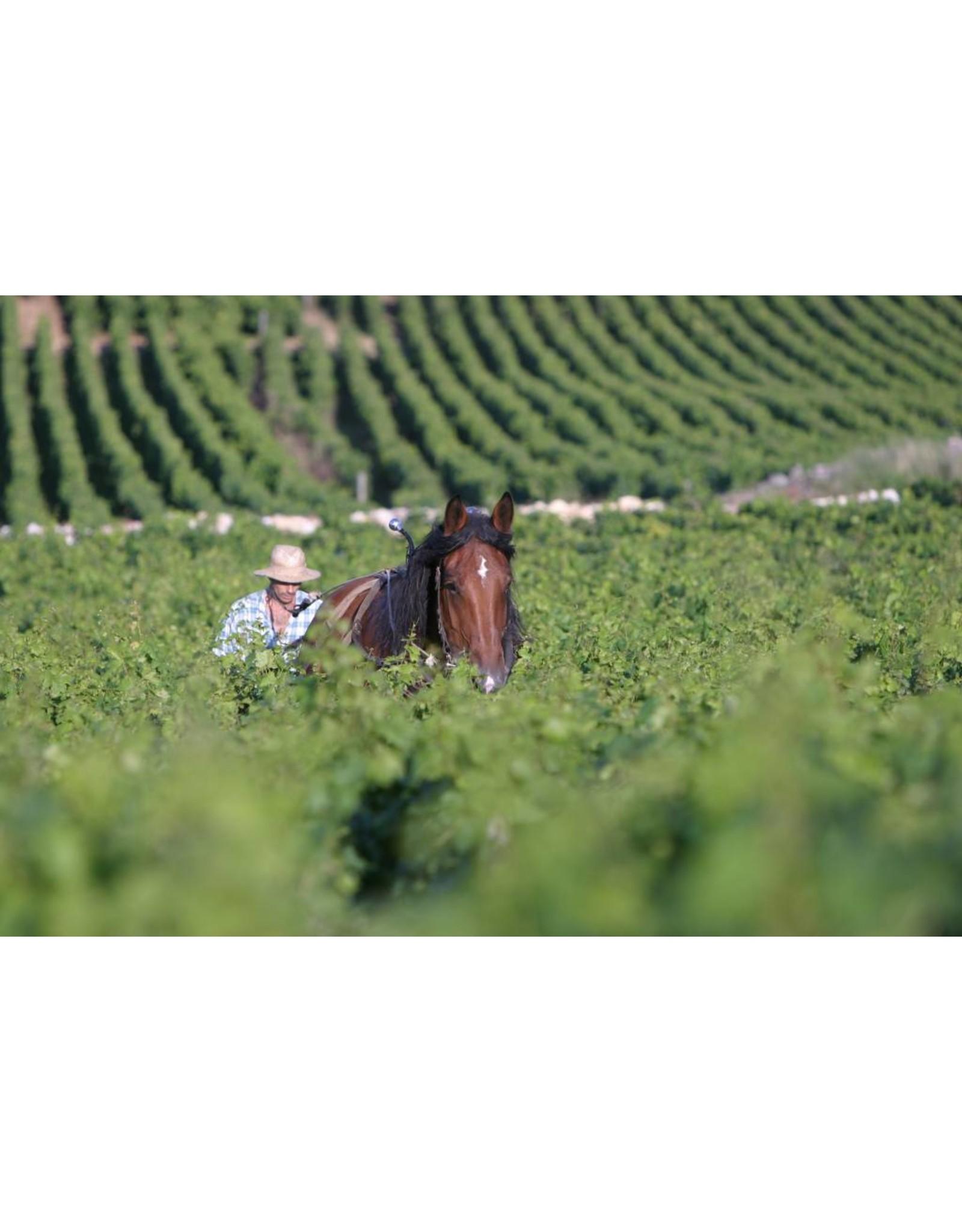 Joseph Drouhin Biodynamische wijn.   Mooie instapwijn voor een goede prijs.