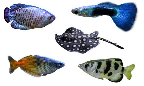 Vissen/winkel