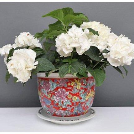 Stilvoller Platz für Ihre Pflanzen