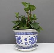 Yajutang Blumentopf mit Untersetzer, Porzellan Blaumalerei Drachenmotiv Ø 20cm