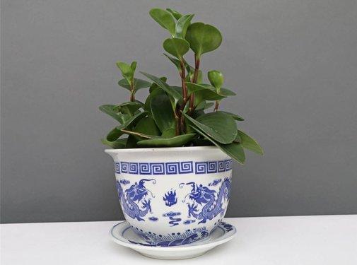 Yajutang Blumentopf Blau-Weiß & Drachenmotiv Ø20