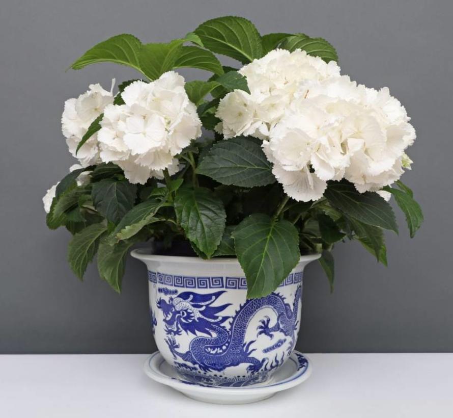 China Porcelain Flowerpot Blue-White with Dragon Motif Ø 28cm