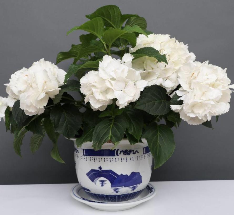 China Porzellan Blumentopf Blau-Weiß mit Landschaft Ø 28cm