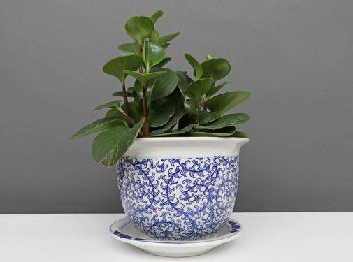 Yajutang Blumentopf Blau-Weiß & Schneckeblatt Ø17