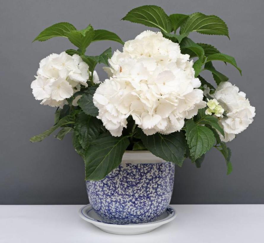 China Porzellan Blumentopf Blau-Weiß schnecken Blätter Ø 28cm