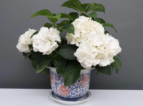 Yajutang Flowerpot Blue-White & red Flowers Ø24cm