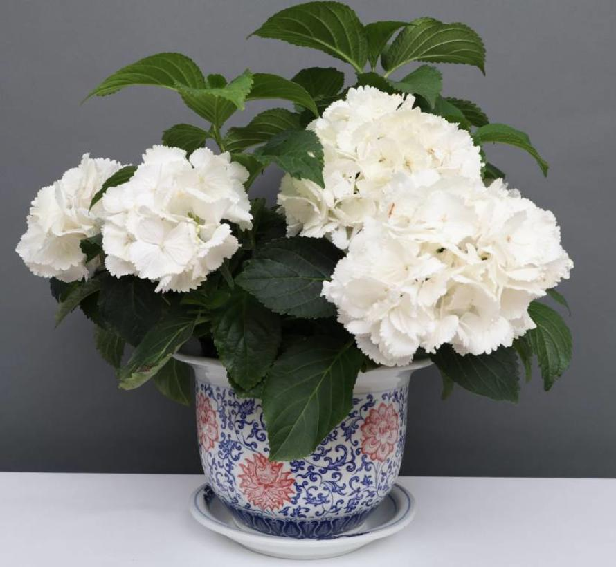 China Porzellan Blumentopf Blau-Weiß mit roten Blumen Ø 24cm