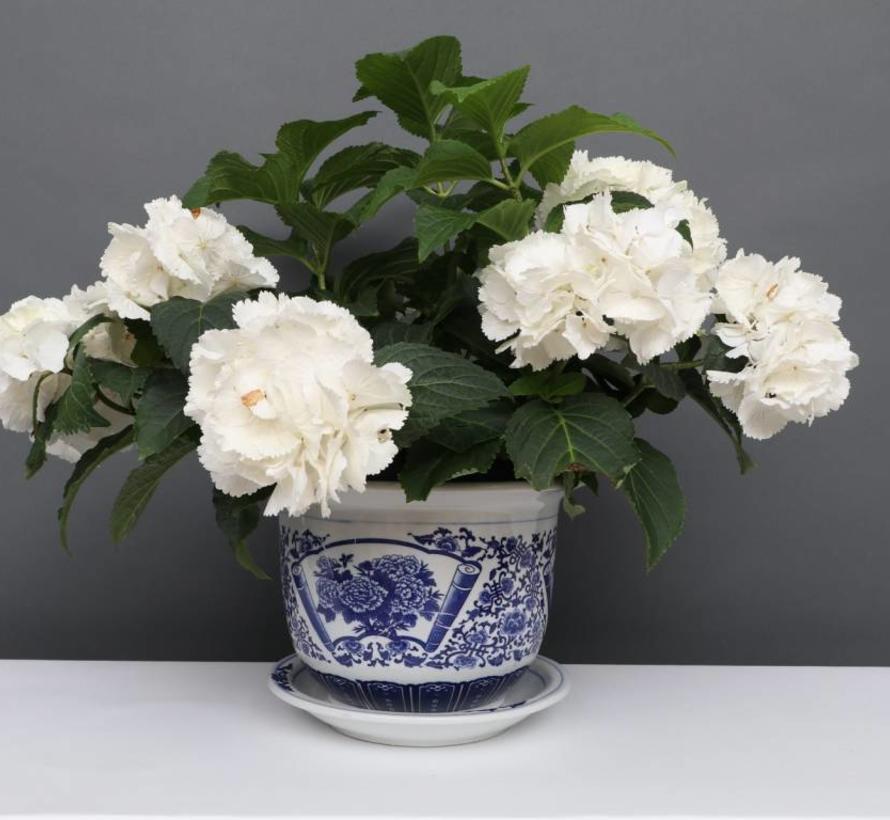 China Porzellan Blumentopf Blau-Weiß mit Pfingstrose Ø 17cm