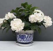 Yajutang Blumentopf Blau-Weiß mit Pfingstrose Ø24