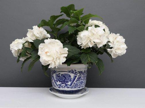 Yajutang Flowerpot blue-white with peony Ø 28cm