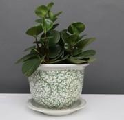 Yajutang Blumentopf mit Untersetzer , Porzellan, Grünmalerei  Ø 17cm