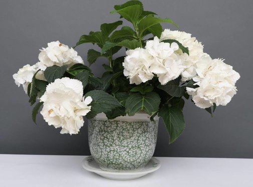 Yajutang Blumentopf mit Untersetzer , Porzellan, Grünmalerei  Ø 24cm