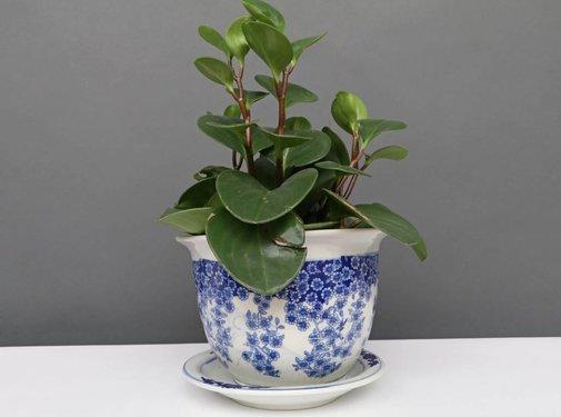 Yajutang Flowerpot Blue-White & Butterfly Ø17