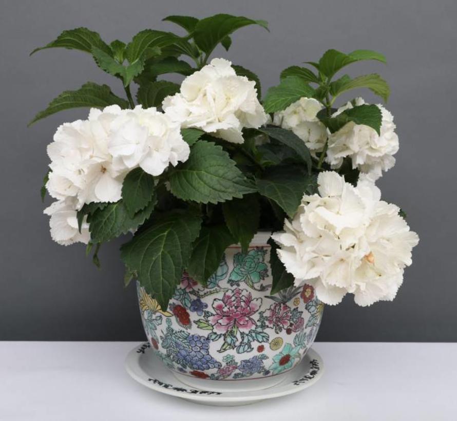 China Porzellan Blumentopf  Weiß mit bunten Blumen Ø 17cm