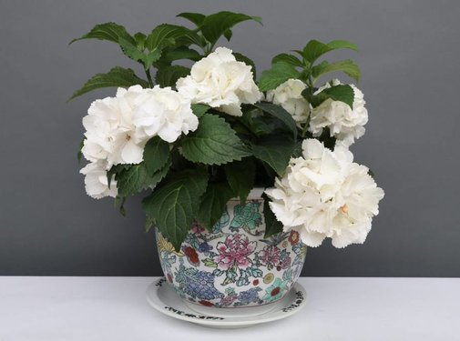 Yajutang Flowerpot white & colorful flowers Ø 28