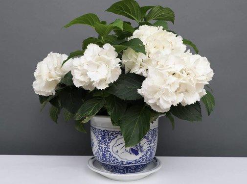 Yajutang Blumentopf Blau-Weiß mit Vier Blumen Ø24