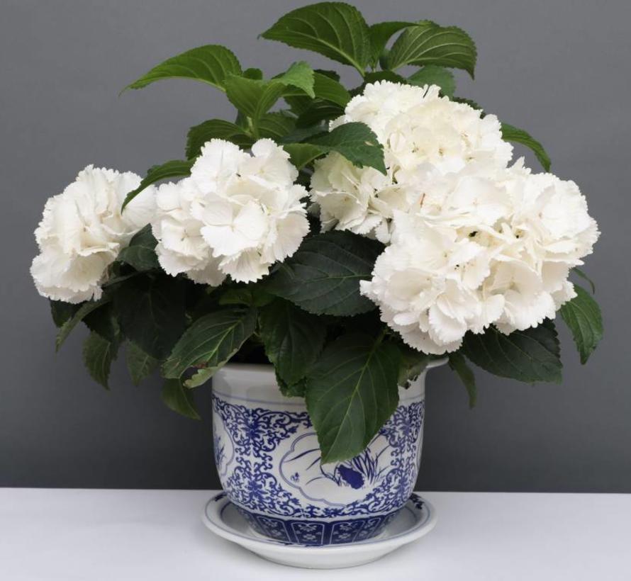 China Porzellan Blumentopf Blau-Weiß mit Vier Blumen Ø 24cm