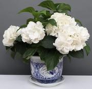 Yajutang Blumentopf Blau-Weiß mit Vier Blumen Ø29