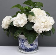 Yajutang Blumentopf Blumenübertopf Pflanztopf Blau-Weiß Porzellan Ø 29cm