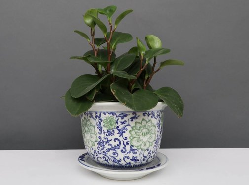 Yajutang Flowerpot Blue-White & Green Flowers Ø17