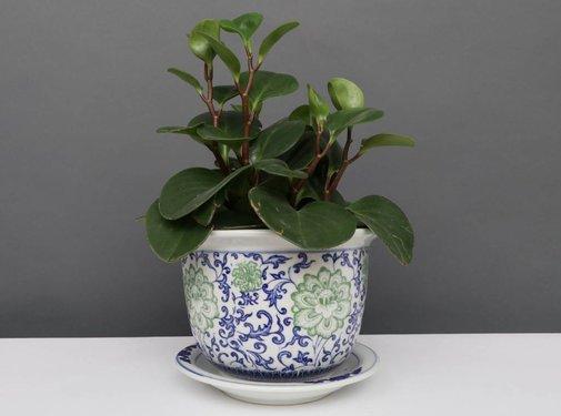 Yajutang Blumentopf Blau-Weiß & grünen Blumen Ø20