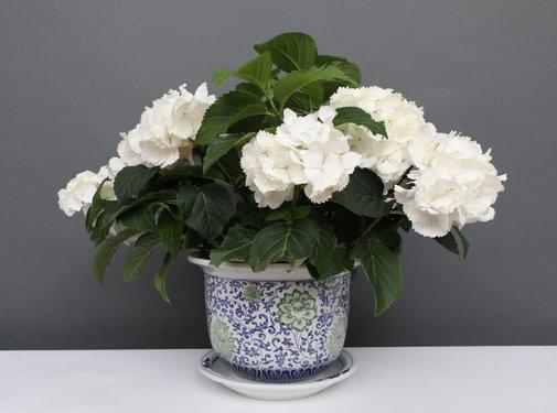 Yajutang Flowerpot Blue-White & Green Flowers Ø24