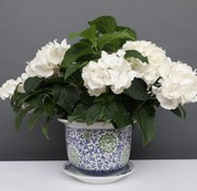 Yajutang Blumentopf Blau-Weiß & grünen Blumen Ø28