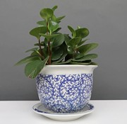 Yajutang Blumentopf Blau-Weiß & Schneckeblatt Ø20